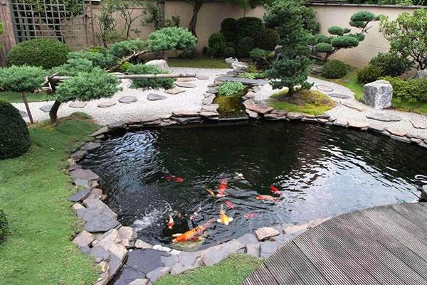 Lưu ý khi đặt bồn cá bể cá trong nhà