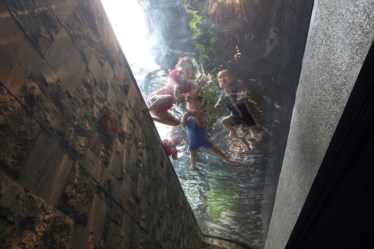 Góc nhìn độc đáo khi nhìn lên phía trên, có thể trông thấy con cháu bơi lội vui vẻ