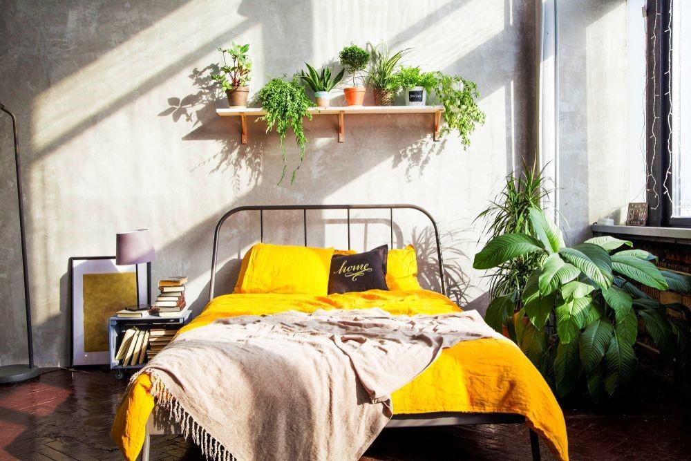 Theo phong thủy phòng ngủ, bạn nên hạn chế trang trí phòng ngủ bằng cây xanh