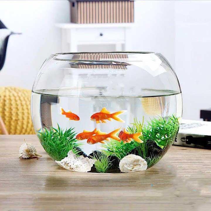 Bể cá cảnh mini là đồ vật phù hợp để trang trí phong thủy bàn làm việc cho người mệnh Thủy